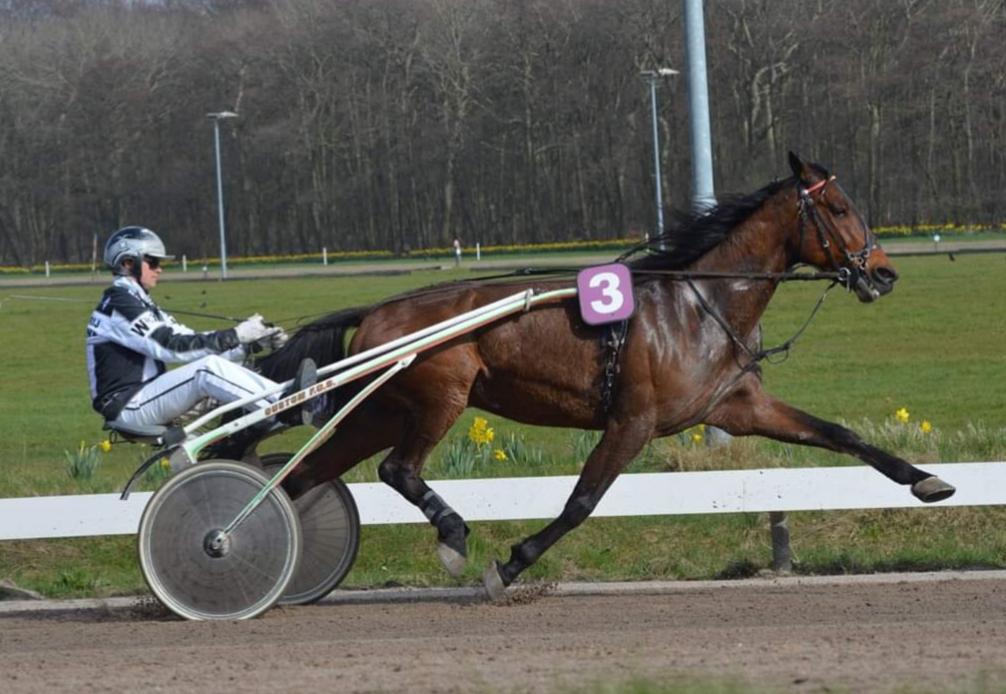 paardenrennen op renbaan Duindigt in Wassenaar. Een leuk dagje uit voor de hele familie
